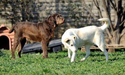 I cani scappano e aggrediscono due vicini: denunciato il proprietario