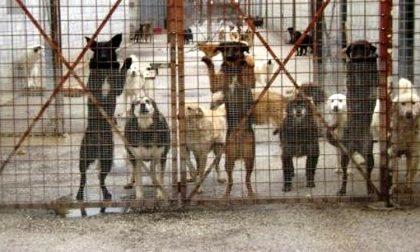 Cani da caccia nella cascina lager due morti e trenta in condizioni pietose