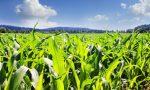 Annata agraria 2017 la Lombardia vede la luce