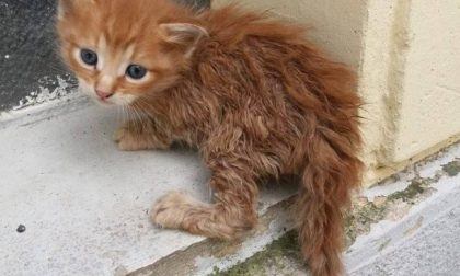 Farmaci per gli animali meno fortunati, a dicembre la raccolta
