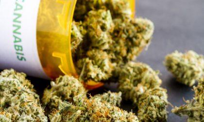 "Cannabis terapeutica, Baffi: ""Potrà essere prescritta anche dai Centri di cure palliative"""