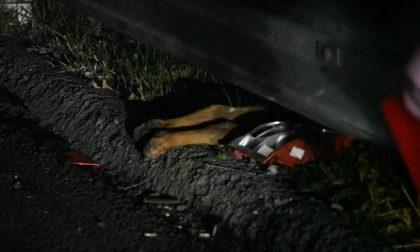Maxi incidente sulla Teem: un uomo in fin di vita, morto un cagnolino VIDEO e FOTO