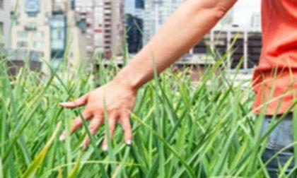 Cresce il verde urbano, a Lodi 43 metri quadrati per abitante