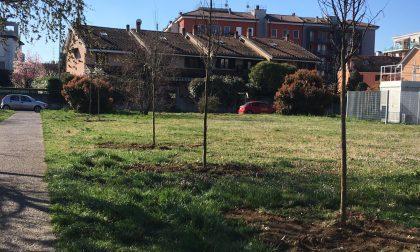 Nuovi alberi piantati a Lodi: 200 piantumature, ecco dove FOTO