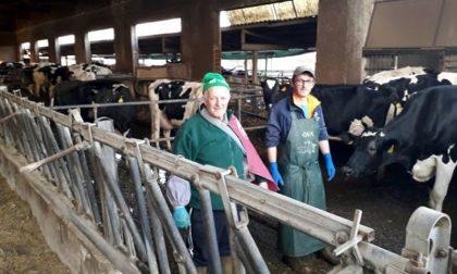 Raid in un allevamento nel Bresciano: ignoti giustiziano sei vacche e sversano tutto il latte