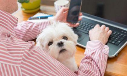 Giornata del cane in ufficio: domani tutti al lavoro con il pet