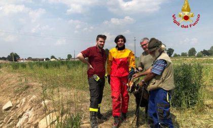 Vigili del fuoco dalla parte degli animali: salvati una capra e un'anatra con pulcini