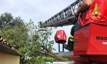 I Vigili del fuoco di Lodi tra bambini bloccati negli ascensori, Inps allagato e alberi in strada FOTO
