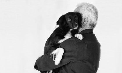 È ufficiale: cure veterinarie gratuite per gli animali d'affezione di proprietà degli anziani