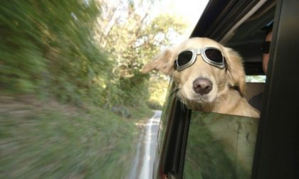 Viaggiare con il cane in auto: cinque consigli utili per il suo benessere