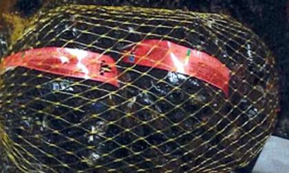 Salmonella nelle cozze prodotte in Liguria: prodotto ritirato