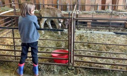 Fattorie aperte: giornata all'insegna della vita in campagna anche a Lodi