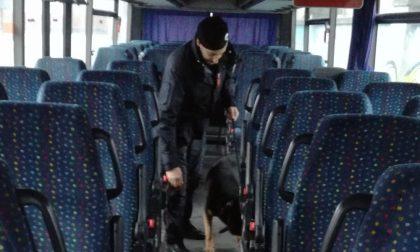 Il cane Denver all'opera per trovare droga sui pullman scolastici