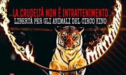 Circo con animali a Lodi: i cittadini dicono no e manifestano