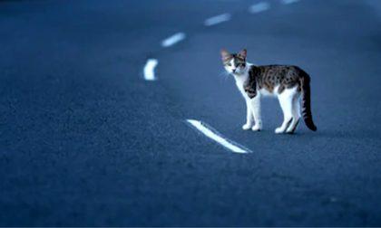 Se il gatto provoca un incidente in autostrada, Serravalle non è responsabile