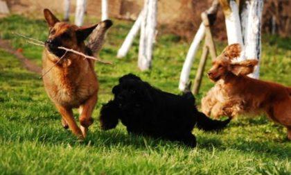 I cani abbaiano e disturbano chi è a casa e così l'area cani di via Montale traslocherà