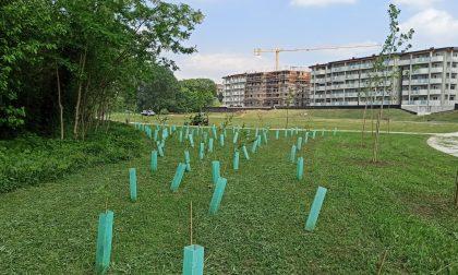 Parco della Spina Verde: ripartono i lavori. Termine previsto per giugno.
