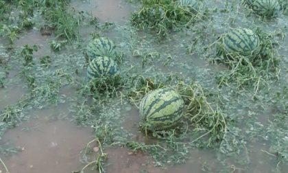 Maltempo, violenta grandinata: frutta e verdure triturate, danni anche sul mais FOTO