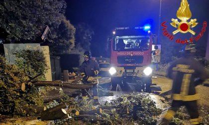 Maltempo nel Lodigiano, alberi abbattuti sulle strade