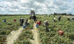 Nuovo focolaio Covid: 97 positivi in un'azienda agricola Mantovana