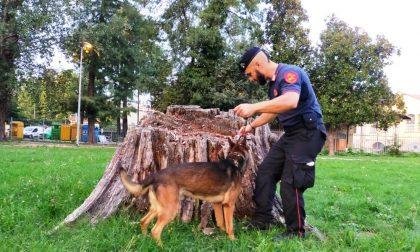 Al parco Margherita Hack trovata marijuana nascosta in un tronco FOTO