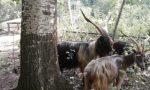 Parco Ittico Paradiso aperto ai bambini che vogliono conoscere la capra orobica autoctona