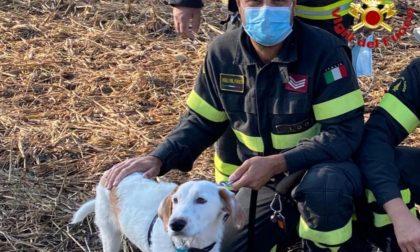 Si infila in un fosso pieno di rovi e non riesce più ad uscire: cane salvato dai Vigili del fuoco