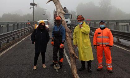 Lodi: in corso la pulizia dei piloni del Ponte Napoleone Bonaparte FOTO