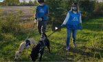 Virus e animali: 200 cuccioli con i padroni malati presi in carico dai volontari TRE STORIE DI SOLIDARIETA' – VIDEO