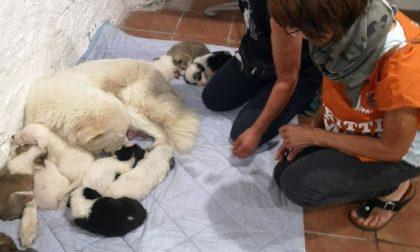 Salvati mamma e 11 cuccioli segregati in un'abitazione privata disabitata FOTO