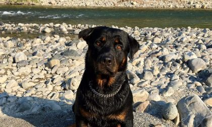 6 cani (5 morti) folgorati dalla corrente tramite tombini: scattano le denuncecontro i sindaci