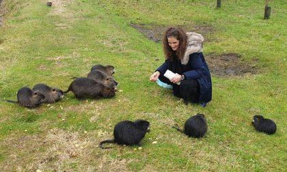 Nutrie lapidate e centinaia di animali selvatici avvelenati: ma non dovevamo essere migliori?