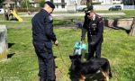 Controlli antidroga, i cani Harry e Rakki all'opera contro gli spacciatori