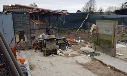 Le foto della casa degli orrori a un passo dal Lodigiano: cani, conigli e cardellini costretti a vivere nelle proprie feci