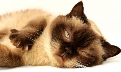 Oggi, 17 febbraio, è la festa del gatto: 7 miti da sfatare sul nostro amico a quattro zampe