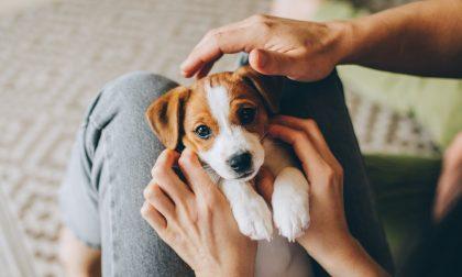 Il mio cane come cane è un disastro, ma come persona è insostituibile