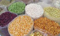 Ruba 200 kg semi di mais da un'azienda agricola, denunciato 40enne