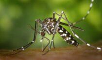 Al via la campagna 2021 di disinfestazione contro le zanzare sulle aree verdi
