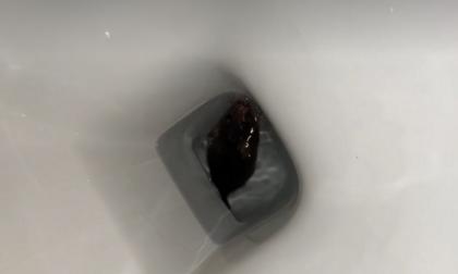 Shock in bagno: nel wc trova un topo. E' il secondo caso in pochi giorni