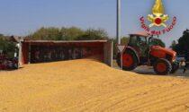 Trattore si ribalta e il carico di chicchi di mais si sparge sulla provinciale